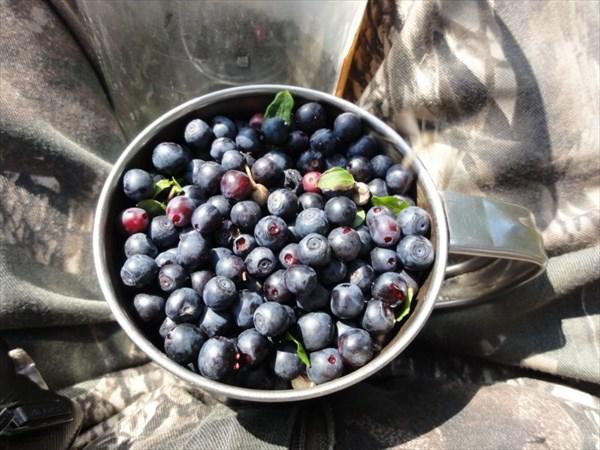 Первые ягоды.