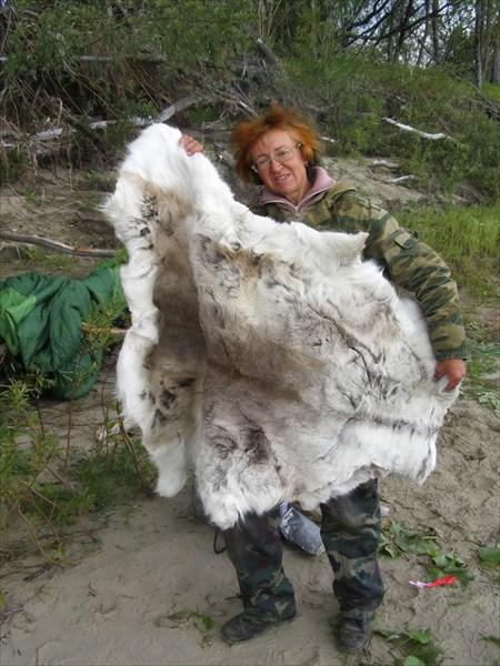 А это полярный кролик!