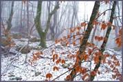 Свежий снег