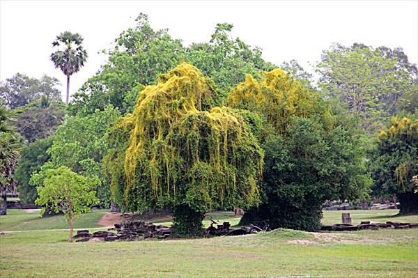 246-Ангкор-Ват