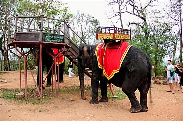 337-Слоны