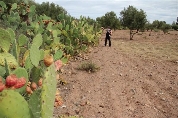 Гуляем по марокканскому огороду