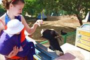 Мы с мамой кормим козла в зоопарке