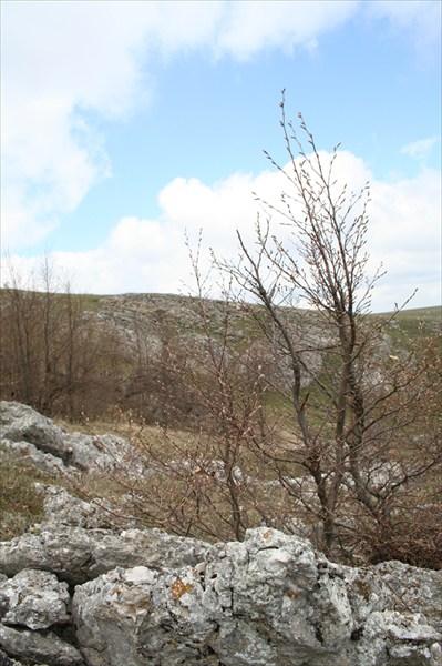 деревце на камнях