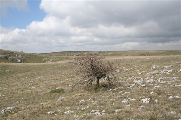 типичное дерево на плато