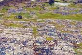 Пестрые камни