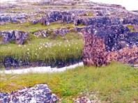 Камни, болотины