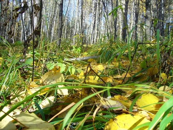 Лес у подножья горы