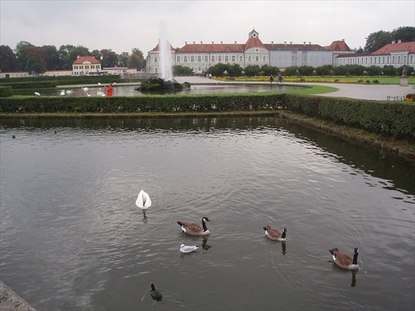 005-Лебедь-мутант