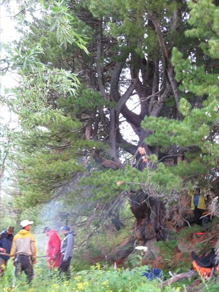 Ливень остановил нас под его ветвями на ночь! Ура!