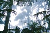 Трорпический лес