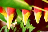 Зубы растения