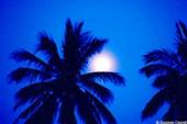 Луна за пальмами