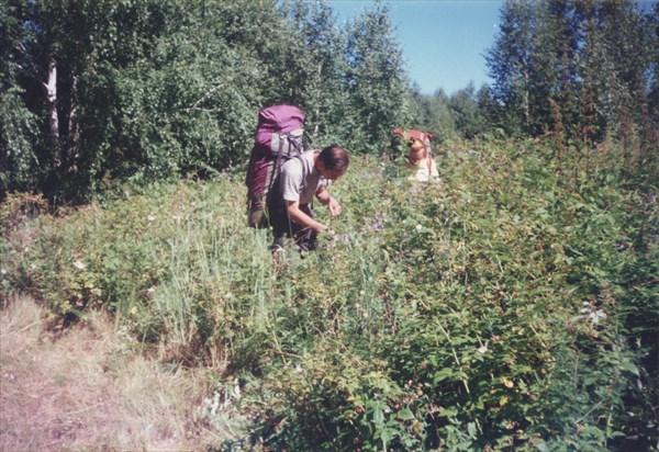 49. 24.07.1997. Последний заход в тургоякские малинники.