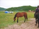 Аеще там были кони ))
