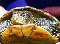 Древняя рептилия, современник динозавра
