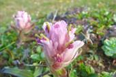 IMG_8598 Цветок.