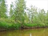 Травянистые берега