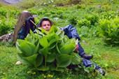 Растения-гиганты