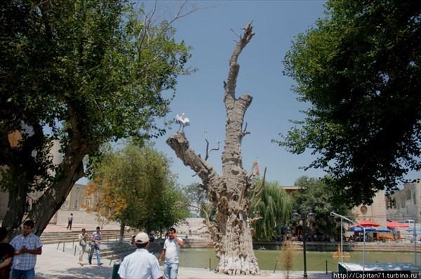 Lyabi-Khaus-Bukhara