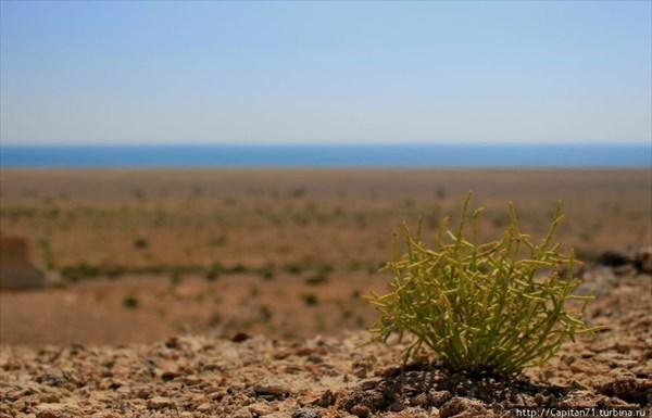 Protstchay-Aral-Uzbekistan