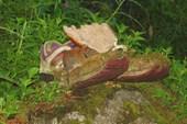 Лемминг и местные замшелые кроссовки