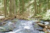 лес в районе Русской поляны