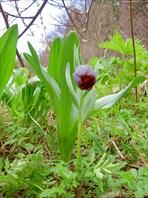 Домбай весна 2008 часть II