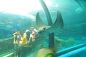 Внутренний тоннель в океанариуме.