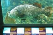 Очень большая рыба.