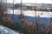 Растения, засыпанные снегом, стали неузнаваемыми...