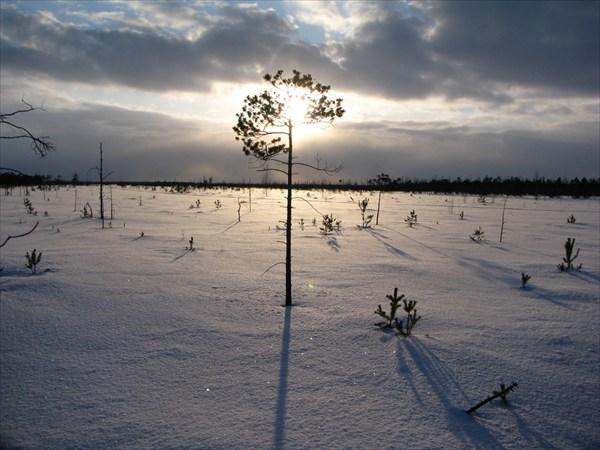 Закат на нашем болоте...