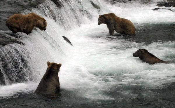 на фото: Медвежий пир