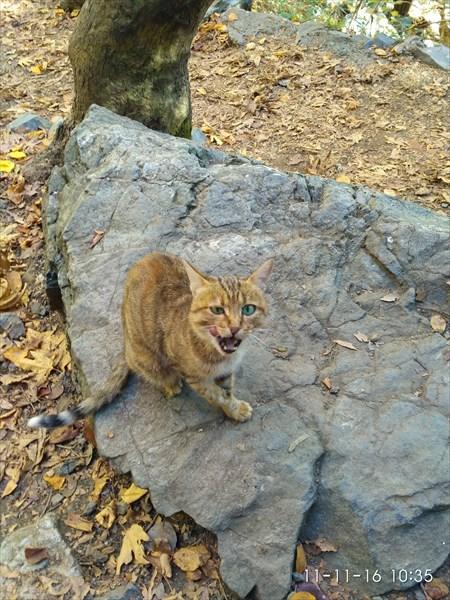 Очень голодный кот.