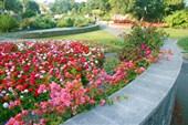 Ботанический сад в Нейпире