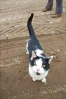 Северный кот-хребет Хибины