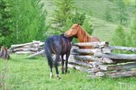 Лошадиные ласки