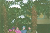 03. Пальмы в снегу