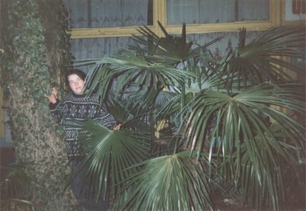 45. Те пальмы, что были в снегу