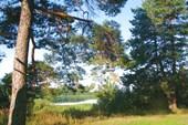 Чудесный лес на нашей стоянке