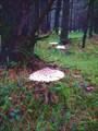 В уральском лесу