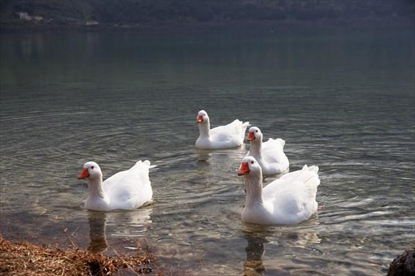 Птицы6