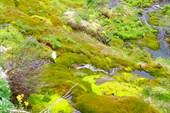 Причудливая зелень мха