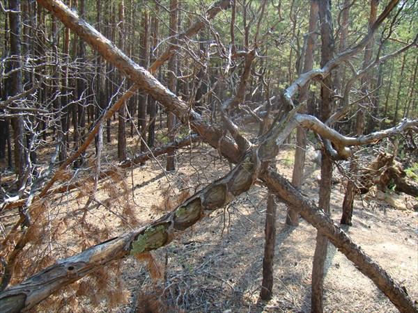 Стражи леса