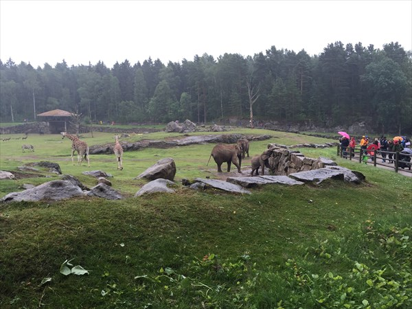 Животные вместе как в дикой природе