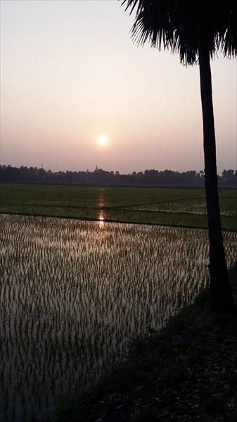Рисовые поля около Маяпура
