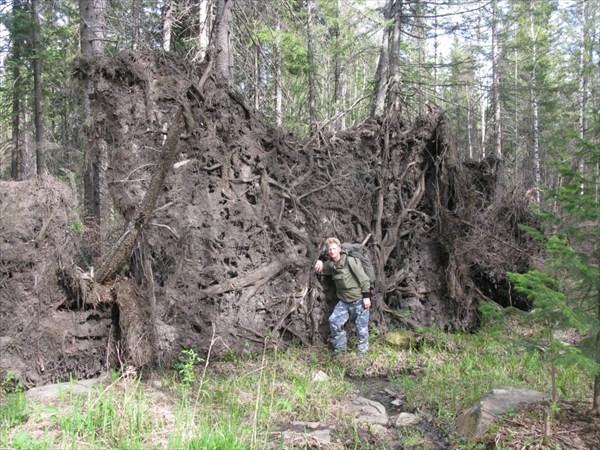 Просто корешлк упавшего дерева....ветер однако...