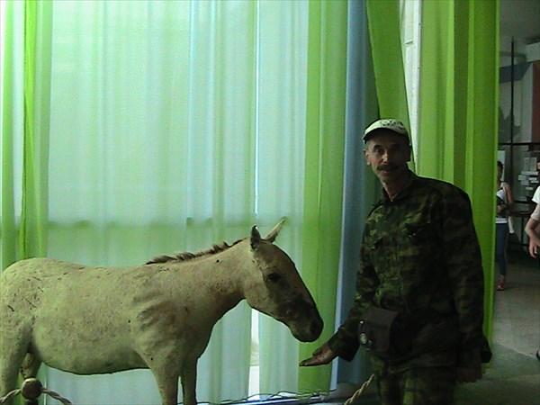 У лошади Пржевальского