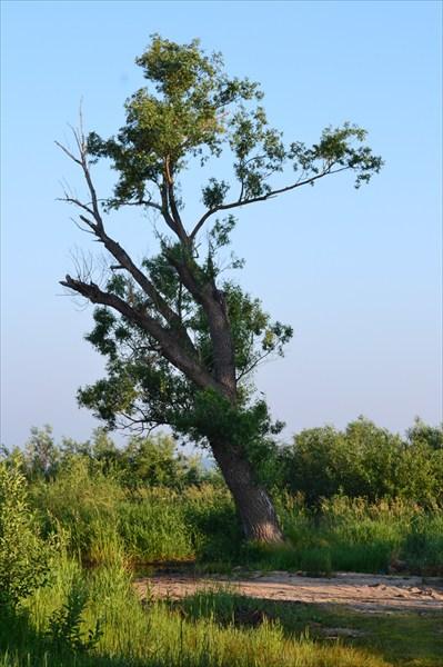 Дерево там такое