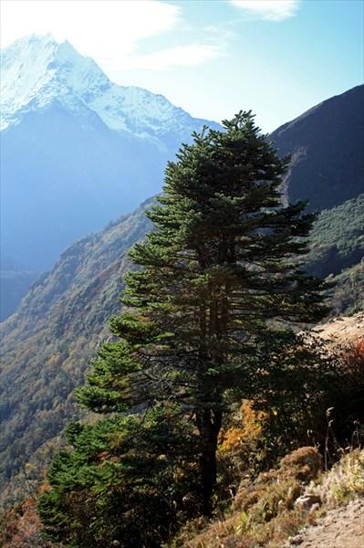 У деревьев более длинные ветви не в сторону юга